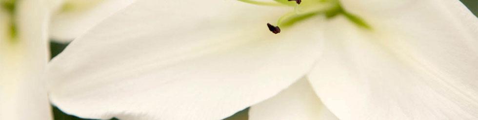 cooperflowers2